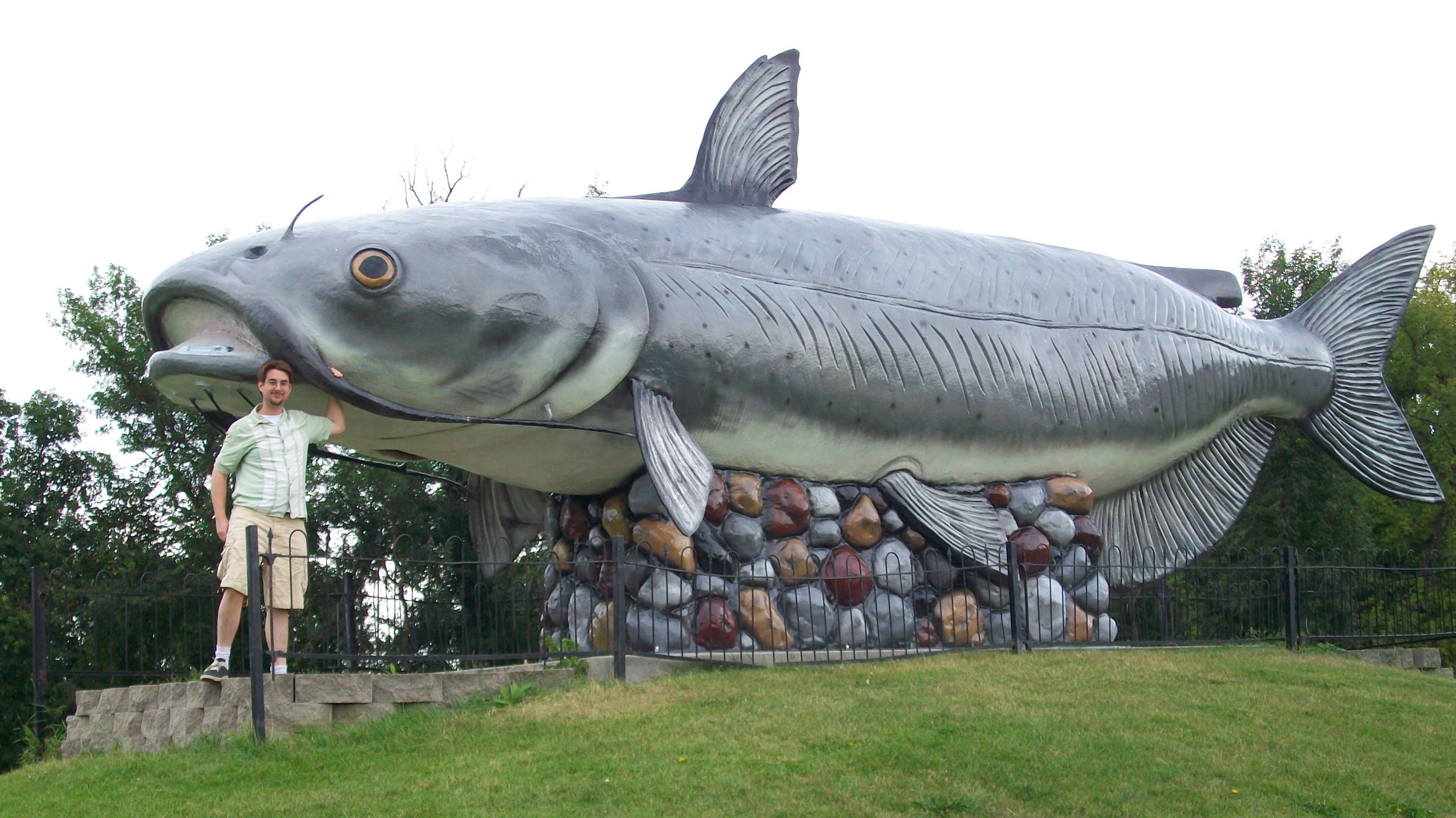 Worlds Largest Catfish http   coolate com blog blog 2009 11 12 and-it    Worlds Biggest Catfish